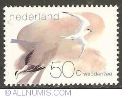 Imaginea #1 a 50 Cent 1982 - Wadden Sea