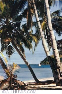 Imaginea #1 a Africa în imagini - Cocotieri și Palmieri pe plaja