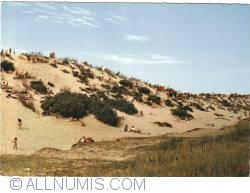 Image #1 of Arid Dune