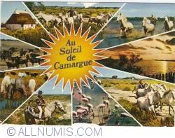 Image #1 of Camargue (1981)