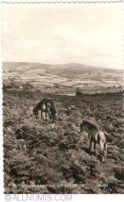 Image #1 of Dartmoor - Pony and Foal