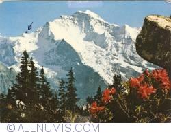 Image #1 of Jungfrau