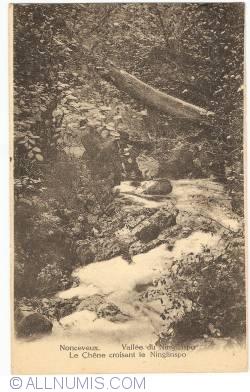 Image #1 of Nonceveux - Ninglinspo Valley - An Oak crossing the Ninglinspo river (Vallée du Ninglinspo. Le Chêne croissant le Niglinspo)