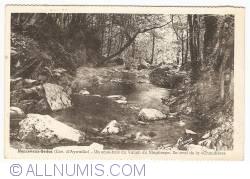 """Image #1 of Nonceveux-Sedoz - Un sous-bois du Vallon du Ninglinspo. En aval de la """"Chaudière"""" (1948)"""
