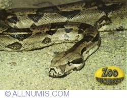 Image #1 of Boa (Boa constrictor) - Zoo Bucureşti