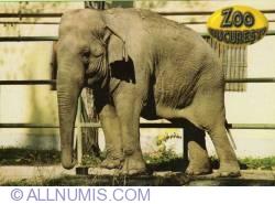 Image #1 of Elefant Asiatic (Elephas Maximus) - Zoo Bucureşti