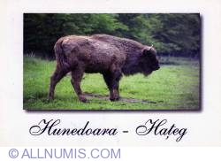 Image #1 of Wisent Reservation of Hateg