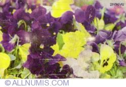 Imaginea #1 a Flori (10)