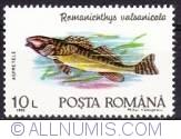10 Lei - Romanichtys Valsanicolas