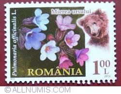 Image #1 of 1 Leu 2012 - Pulmonaria officinalis L.