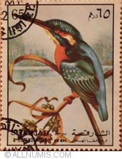Image #1 of 65 Dh Common kingfisher